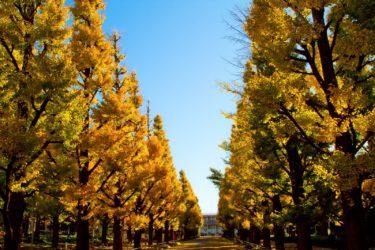 大学職員採用の学校別対策:桜美林大学